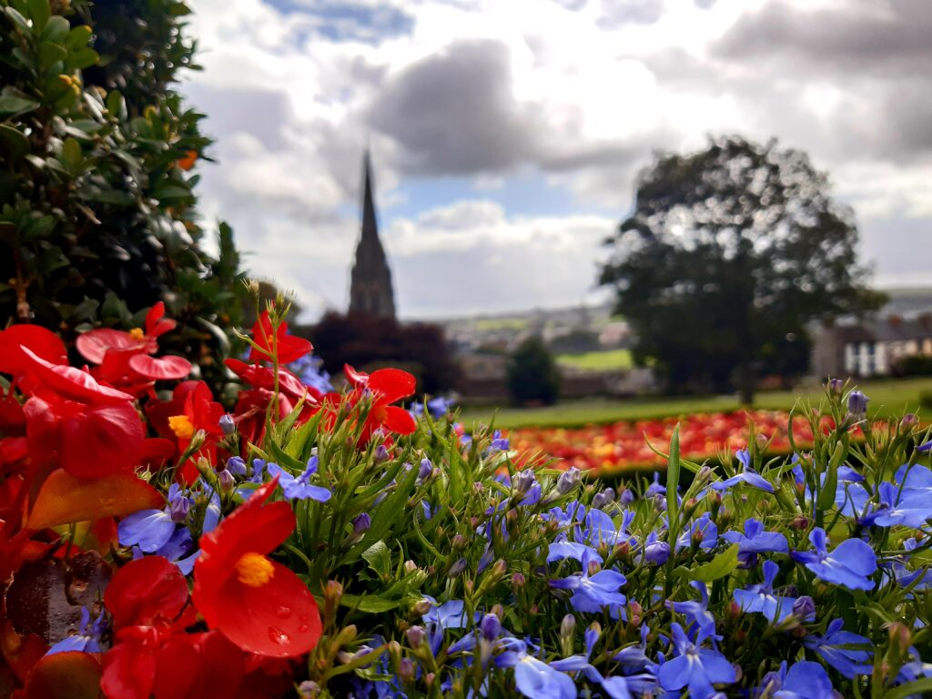 Flowers in Brooke Park Derry by Renato Guiso