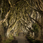 25943_Game of Thrones - The Dark Hedges_The Kingsroad