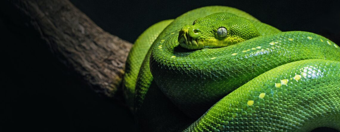 no snakes in ireland